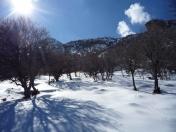 برف در نواکوه